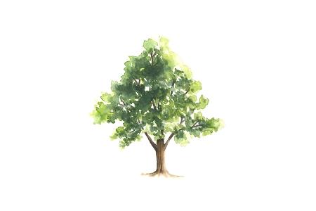 albero 900×600